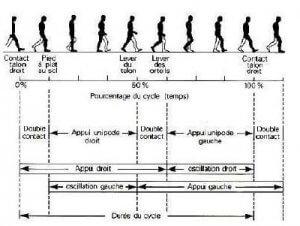 Figure du cycle de la marche